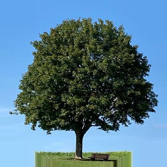 Kaisercoaching Ehebaratung Paarberatung Familienberatung Image Baum